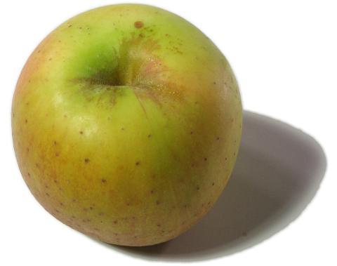 goldrush apple