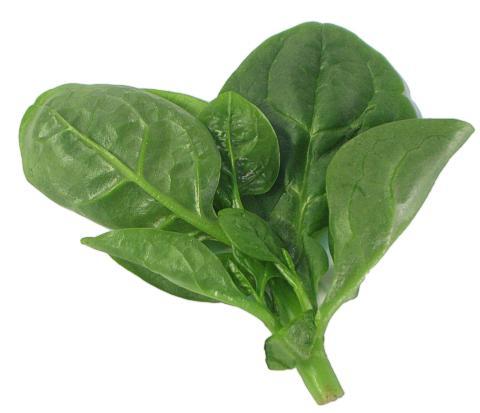 Malabar spinach, Ceylon spinach, East Indian spinach, Surinam spinach ...